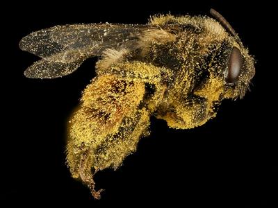 Loupe binoculaire d'entomologie ou analyse des insectes