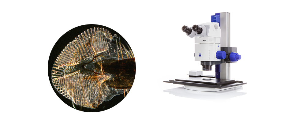 Stéréomicroscope ZEISS StéREO Discovery V8